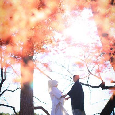 紅葉の美しい結婚写真