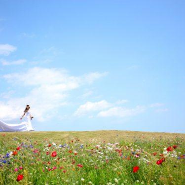 青空と色とりどりのお花畑がかわいい風景の中で撮影した結婚写真
