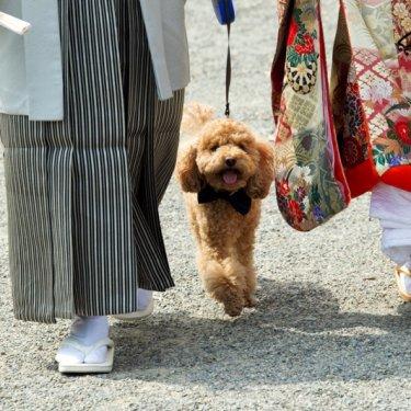 愛犬と一緒に神社参りしながら撮った結婚写真