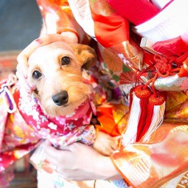 色打掛を着た新婦さんと、かわいい着物を着た愛犬との記念写真