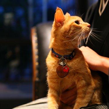 アトリエスタジオで猫と一緒に和装前撮り