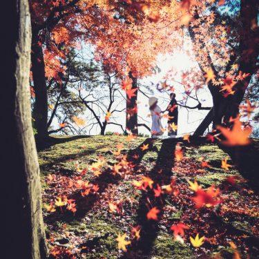 紅葉が舞う中で撮影された素晴らしい結婚写真