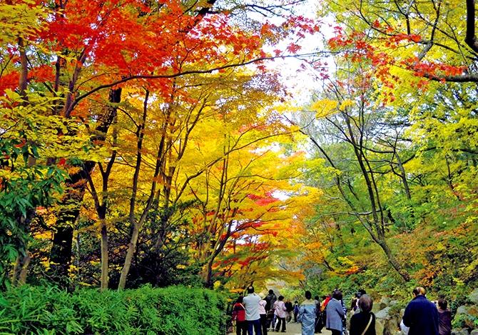 東山動植物園の5色の紅葉