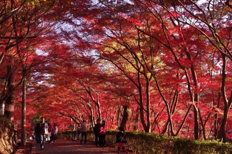 名城公園の紅葉のトンネル