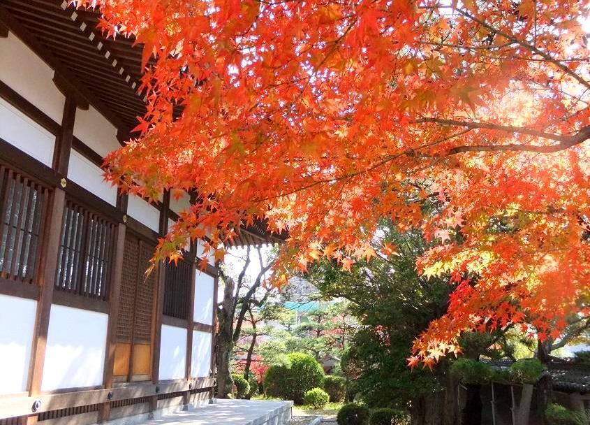 東山荘の和装ロケーションフォトの紅葉スポット写真