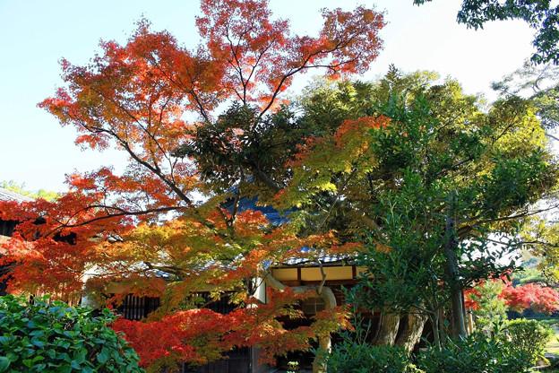 六華苑の紅葉