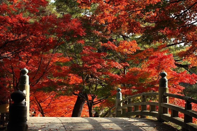 紅葉がキレイに見える名城公園の橋