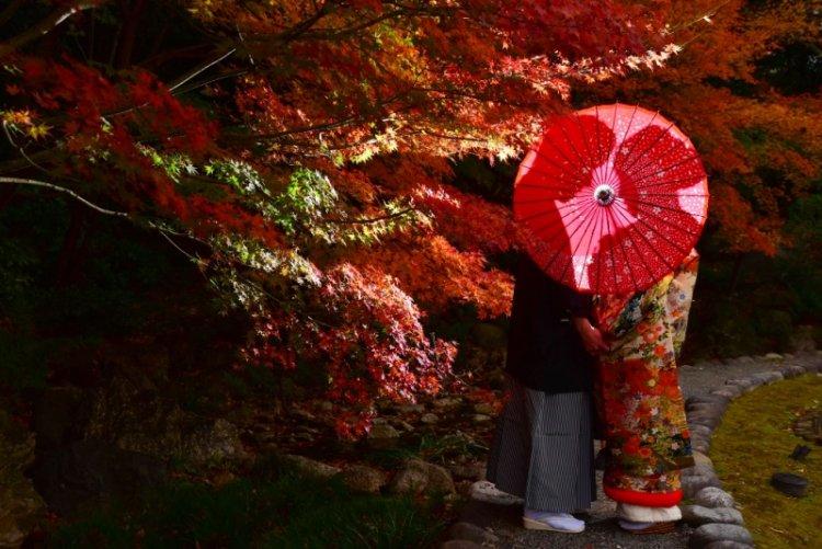 紅葉と真っ赤な和傘をさして和装ロケ