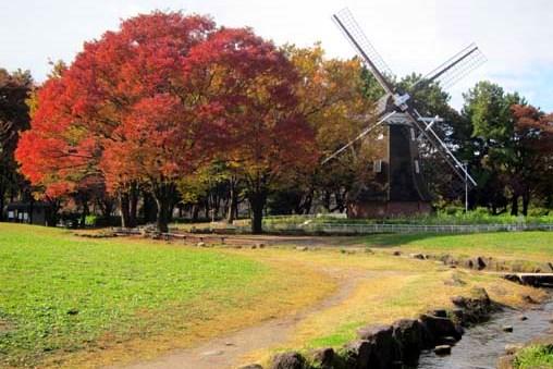 名城公園の風車と紅葉をバックに撮影するステキな結婚写真