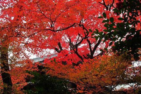 紅葉がキレイな名古屋のロケーション撮影場所