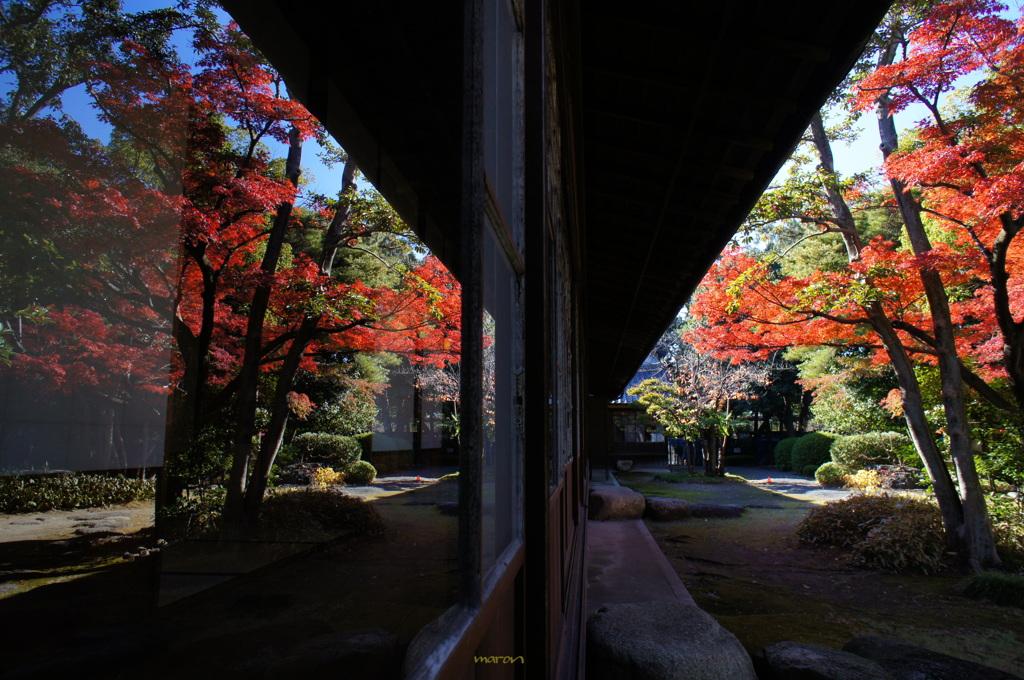 三重県の六華苑の紅葉がキレイな景色をバックに撮った和装前撮りフォト