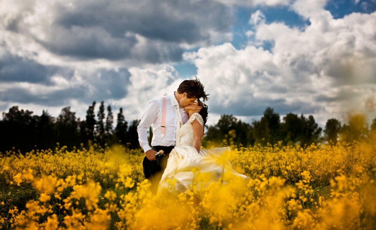 菜の花畑の真ん中でキスをしている結婚写真