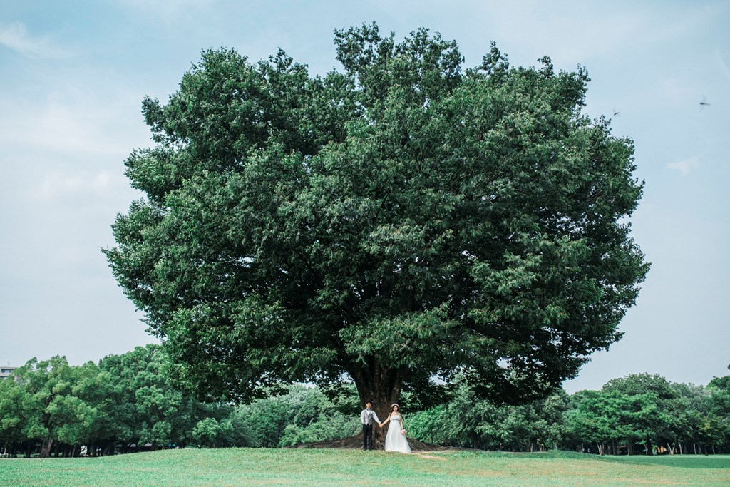 大きな木の下で
