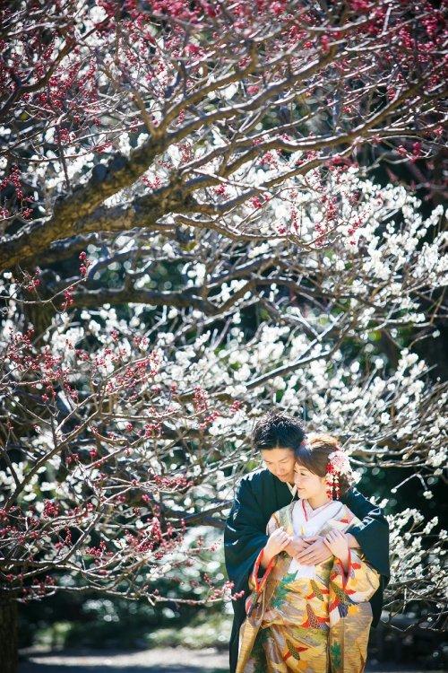 白い梅の花が綺麗です」