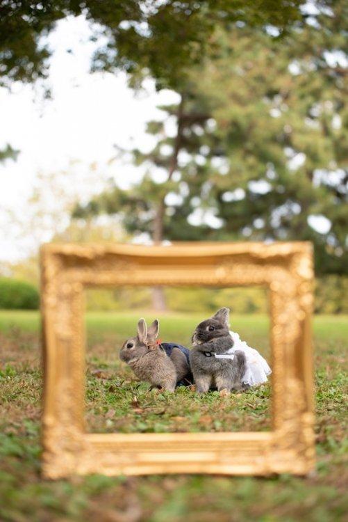 仲良しなウサギの前撮り
