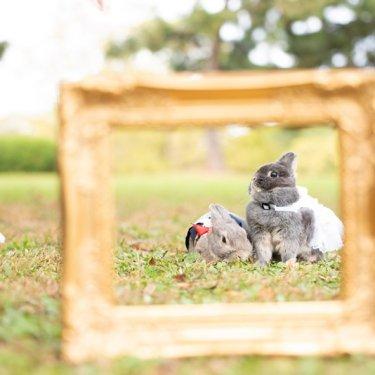ウサギと一緒に前撮りロケーション撮影