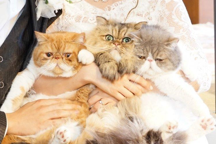 3兄弟の猫ちゃんのかわいいスタジオ撮影