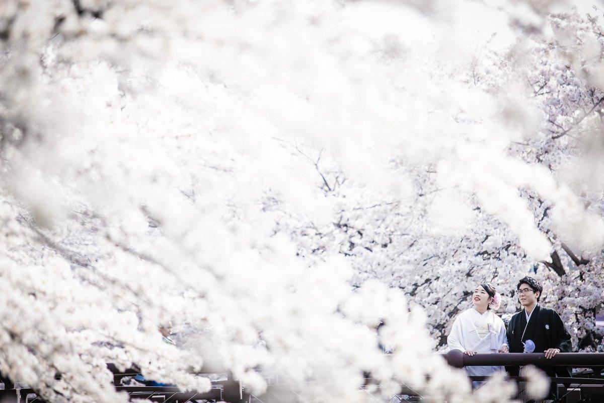 桜満開の中で白無垢をきた新婦様