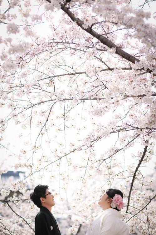 見上げる空は桜と青い空