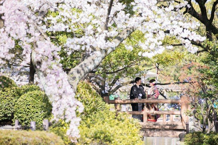 桜の花と緑の葉と新郎新婦