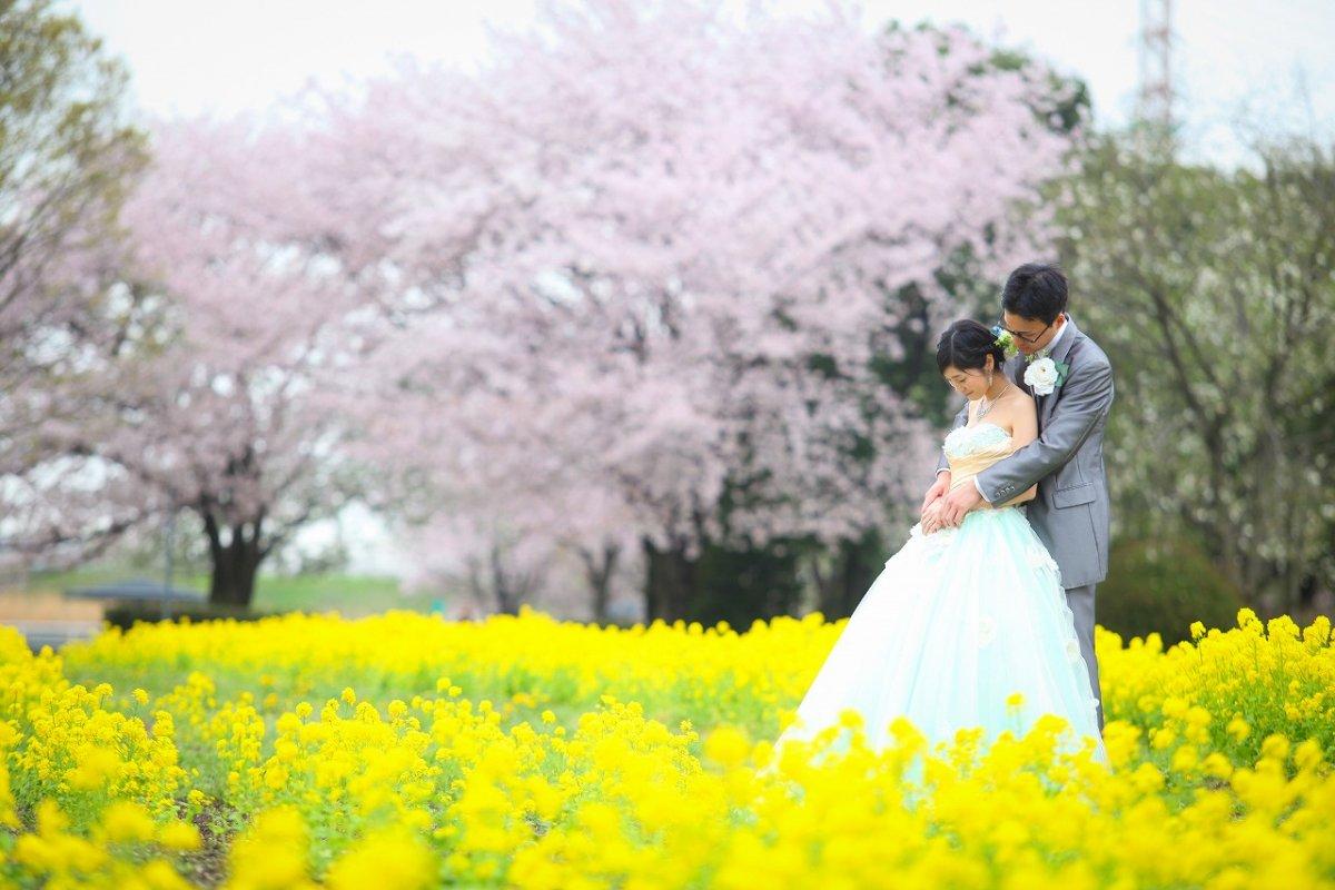 菜の花畑&桜の中に包まれてウェディングドレスの新婦様