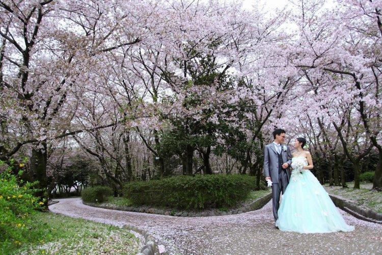 桜のアーチを手を繋ぎ洋装ロケーション撮影