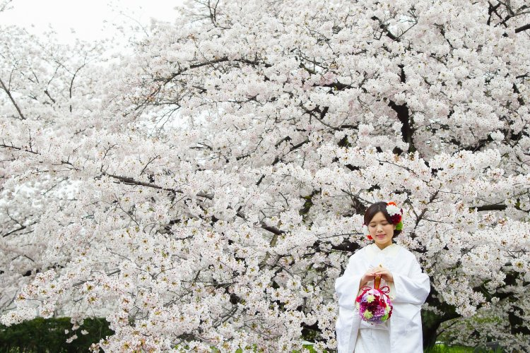 桜の中でもひときわ美しい白無垢姿の新婦様