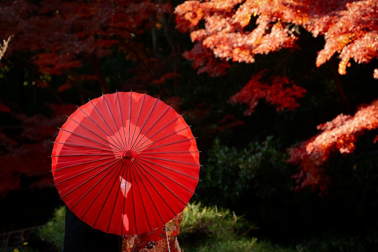 真っ赤な紅葉に囲まれて