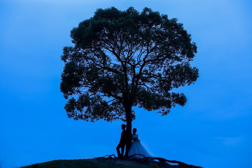 大高緑地公園の大きな木と新郎新婦
