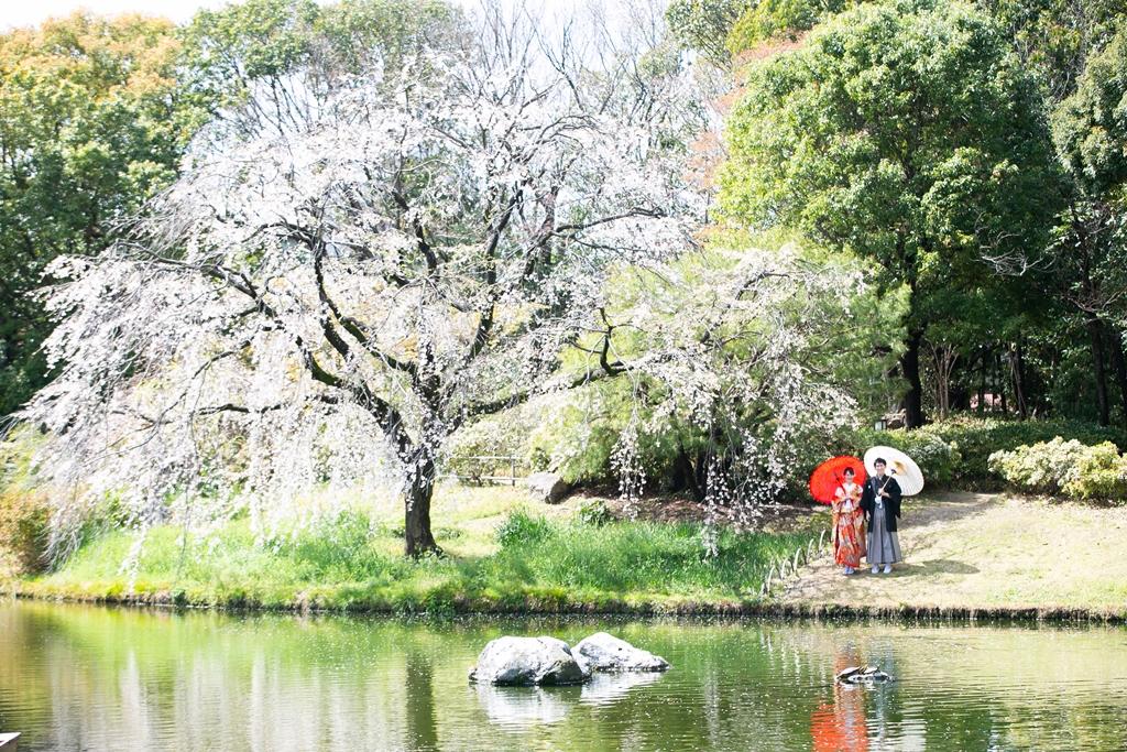白鳥庭園の大きな桜の木と新郎新婦